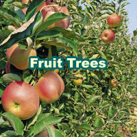 Fruit_Trees_200x200_en