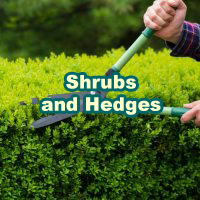 Shrubs_Hedges_200x200_en